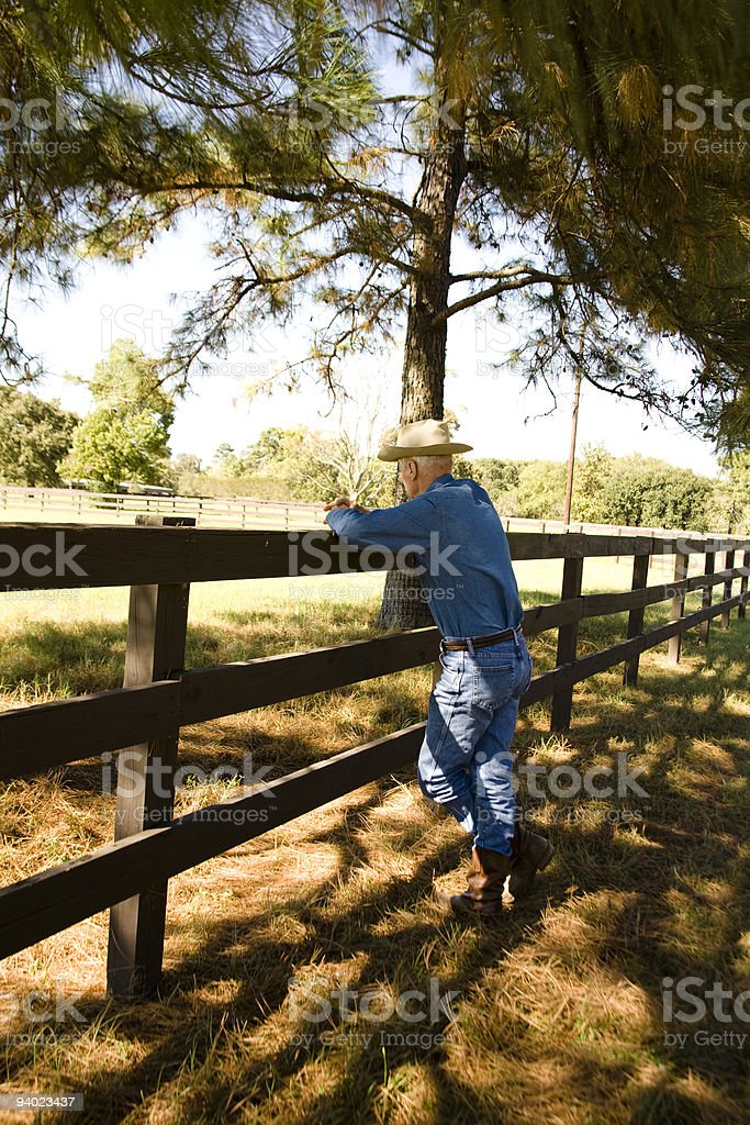 Rancher looking over the livestock. royalty-free stock photo