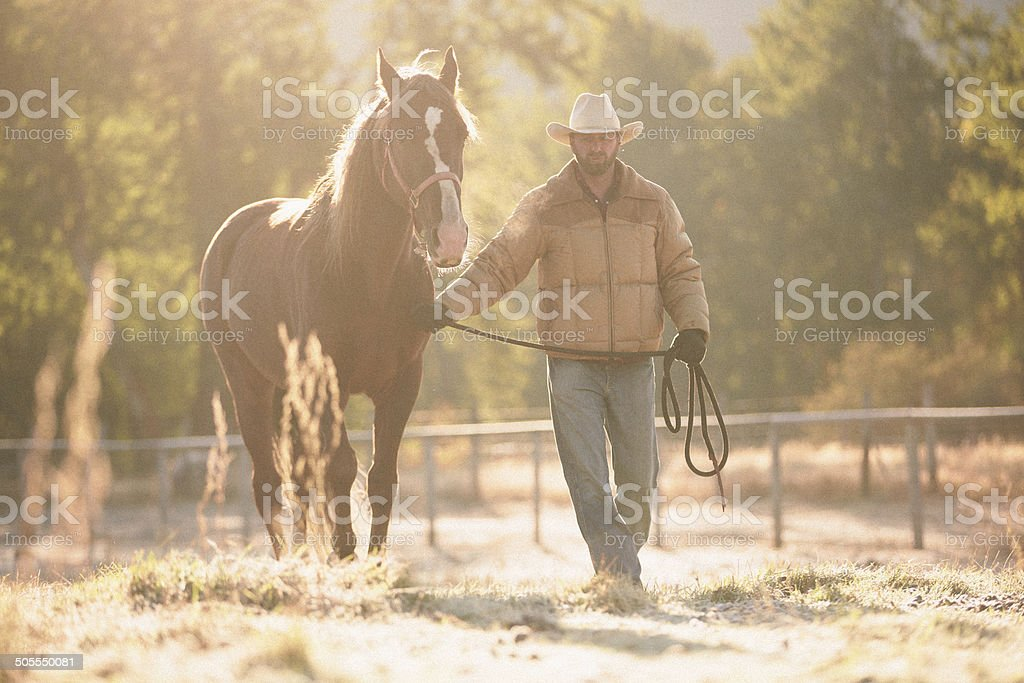 Rancher walks horse with lead rope through beautiful golden field royalty-free stock photo