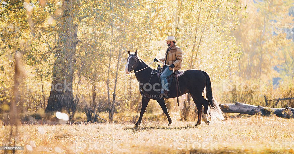 Rancher wearing cowboy hat rides horse through golden field royalty-free stock photo