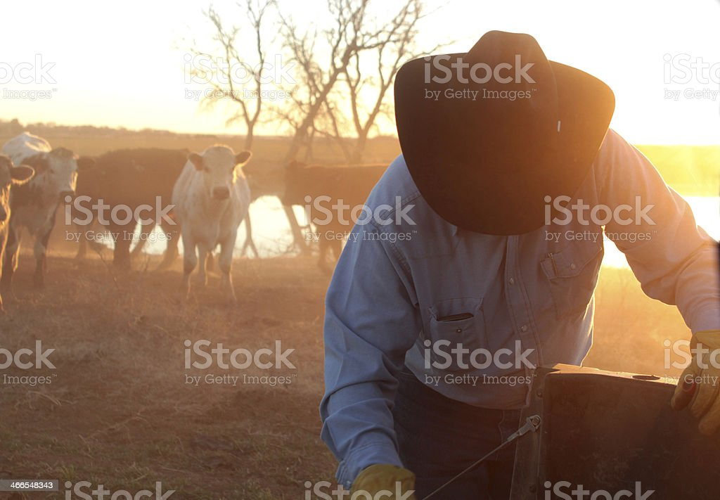 Rancher with a cowboy hat works on fence in front of cattle stock photo