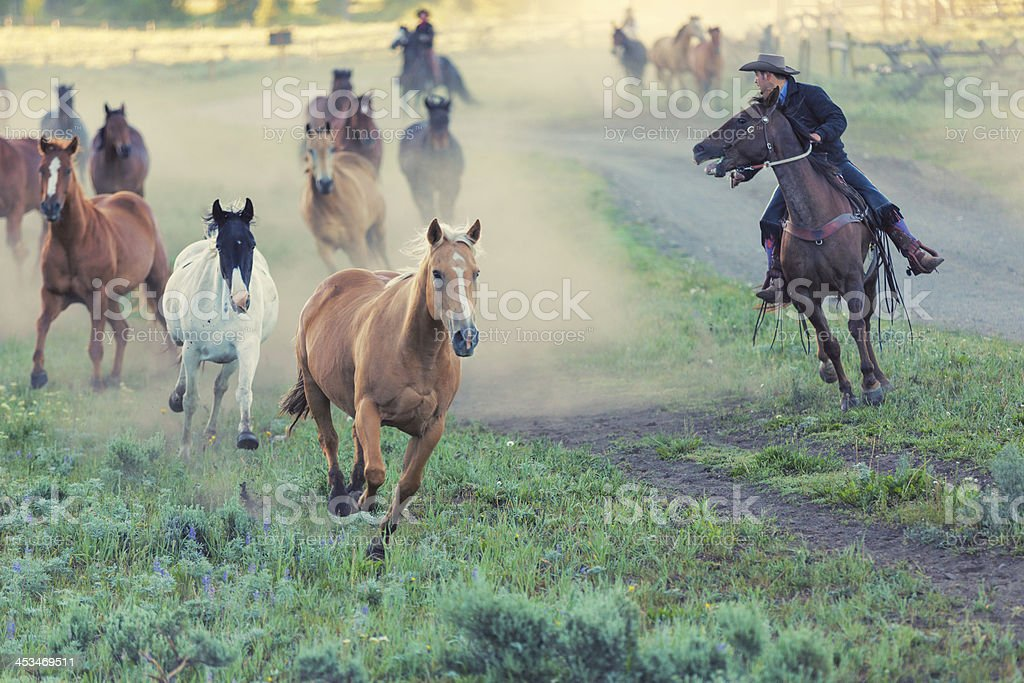Ranchers driving horses in from field to corral royalty-free stock photo