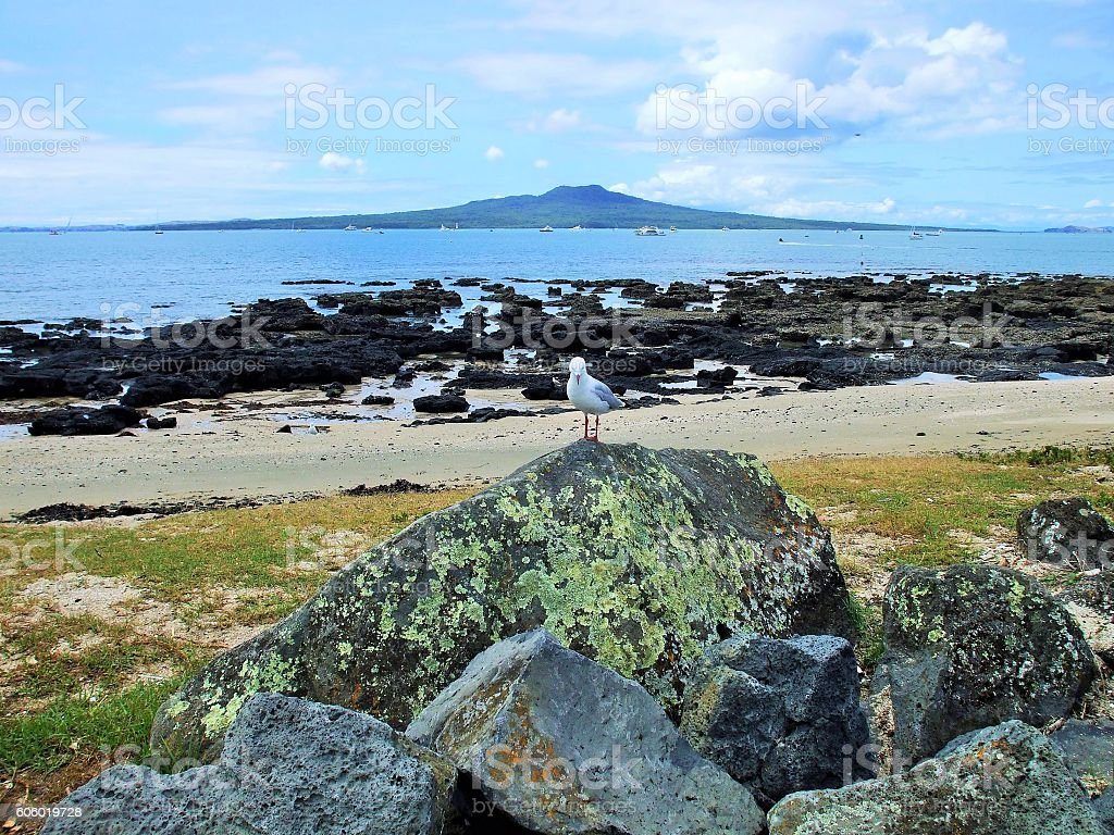 Rangitoto, fossil forest, and a seagull stock photo