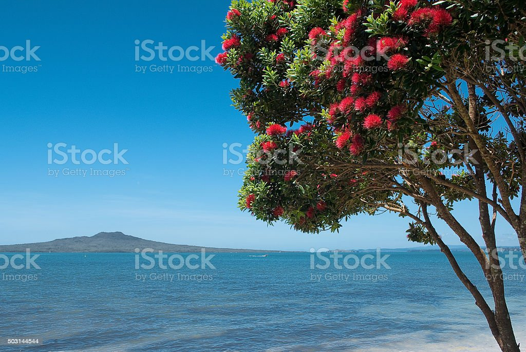 Rangitoto Island with pohutukawa tree in bloom stock photo