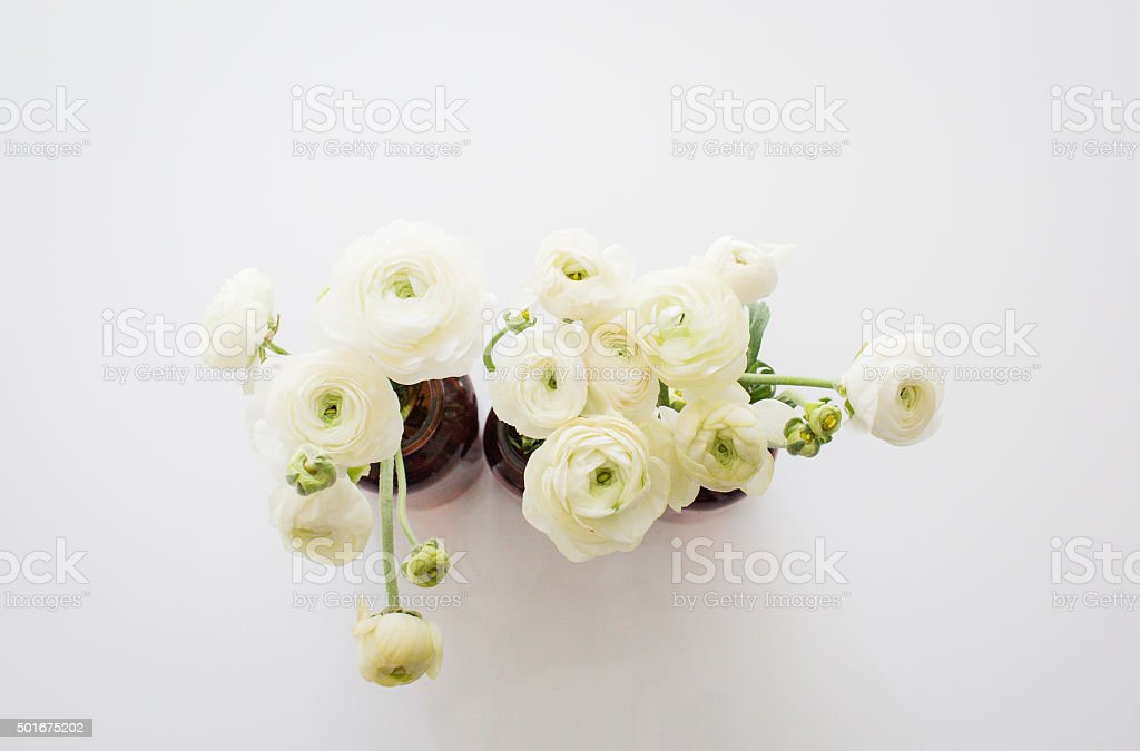 Ranunculus in an apothecary jar stock photo