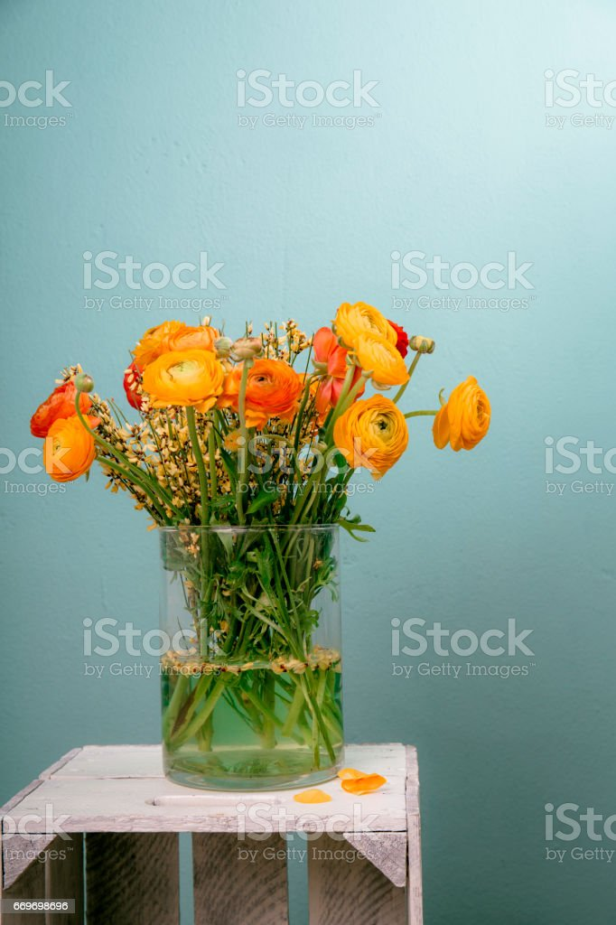 ranunculus in the flower vase on a wooden table stock photo