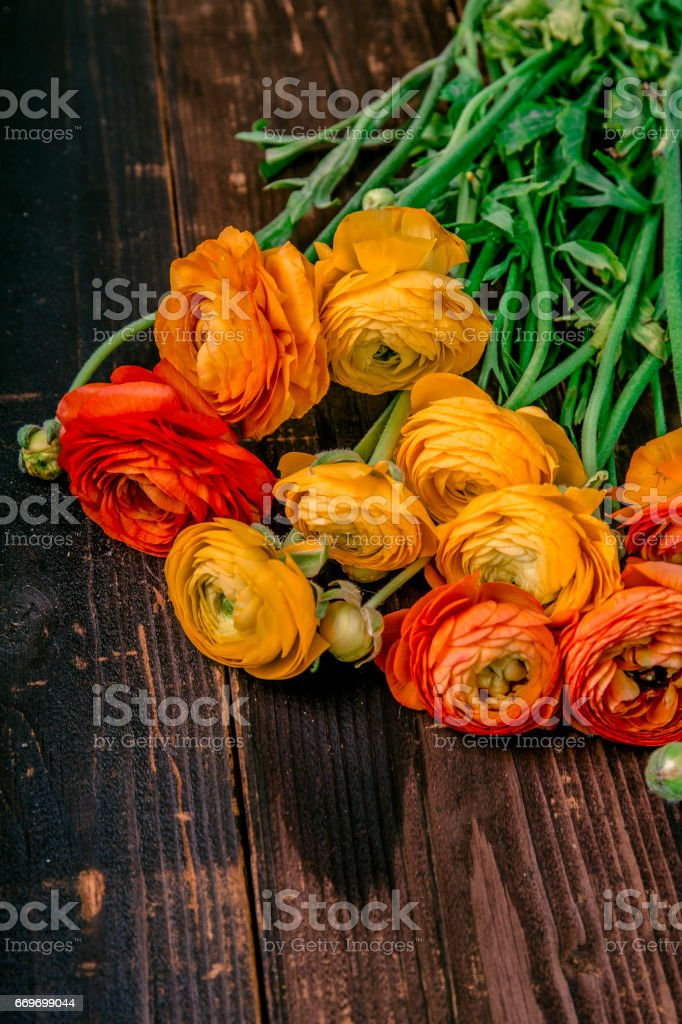 Ranunculus on a wooden table stock photo