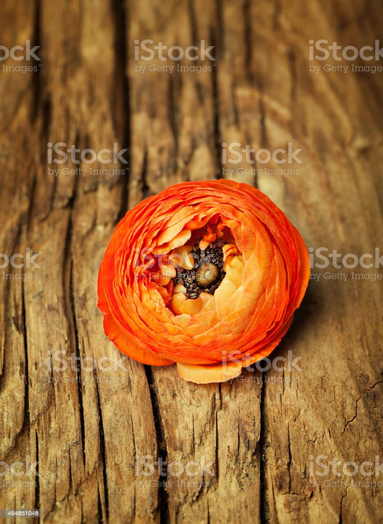 Ranunculus on vintage wooden background stock photo