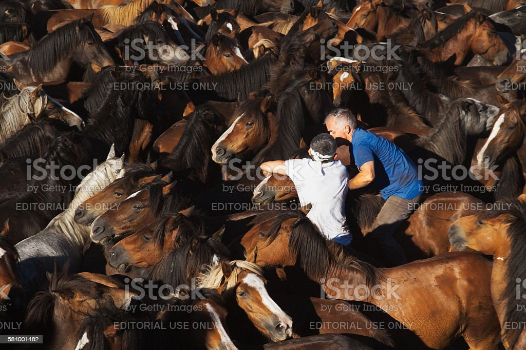 Rapa das Bestas in Sabucedo stock photo