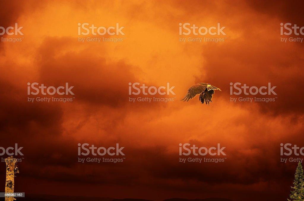 Rapace sur ciel de feu stock photo