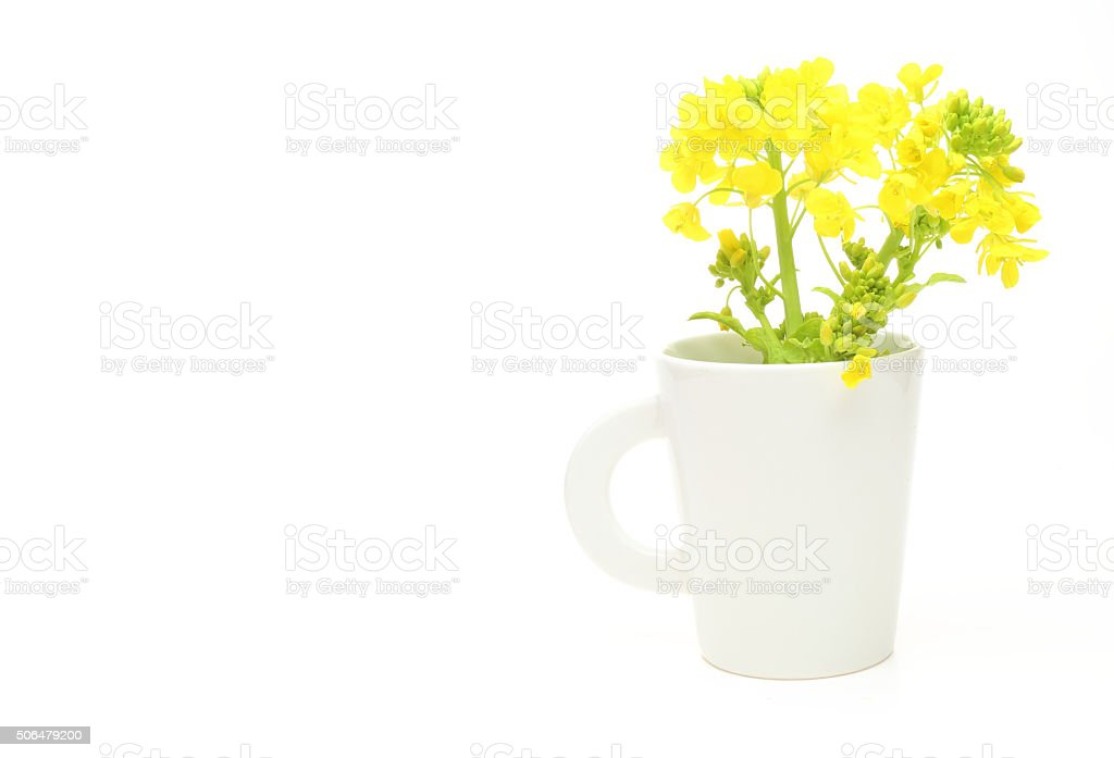 Rape blossoms in a mug stock photo
