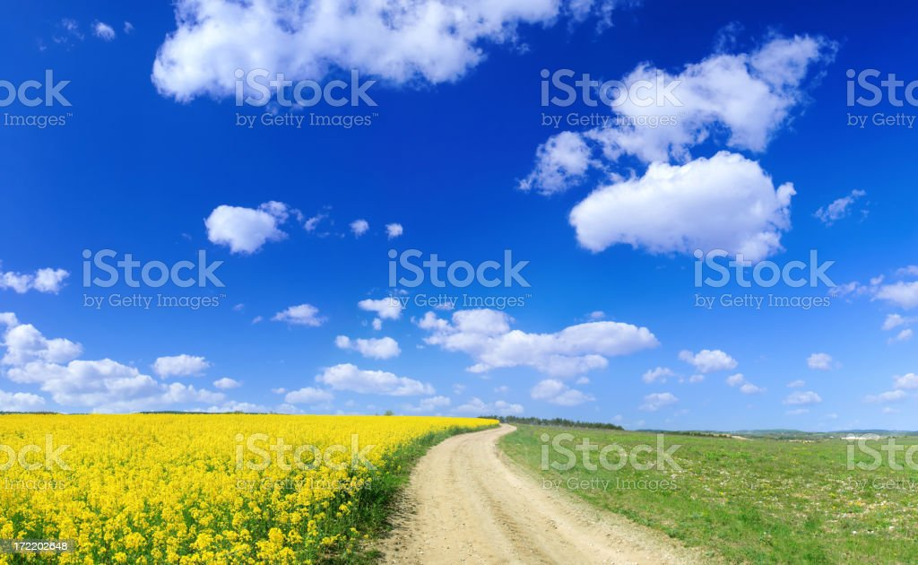 Rape field and country road panorama royalty-free stock photo
