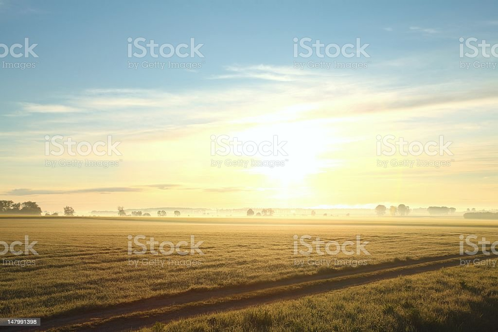 Rape field at dawn royalty-free stock photo