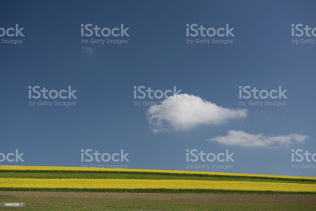 Rape field in Thurgau stock photo