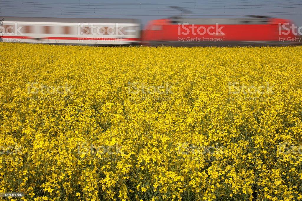 rape field with speeding train royalty-free stock photo