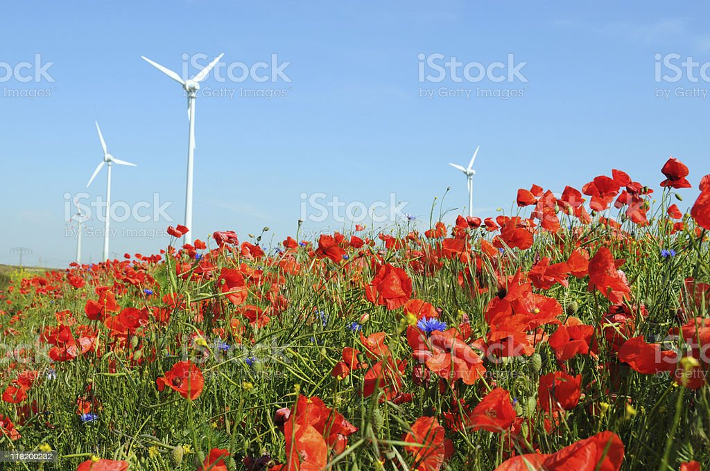 Rape fields with Wind Turbine and red Poppy royalty-free stock photo