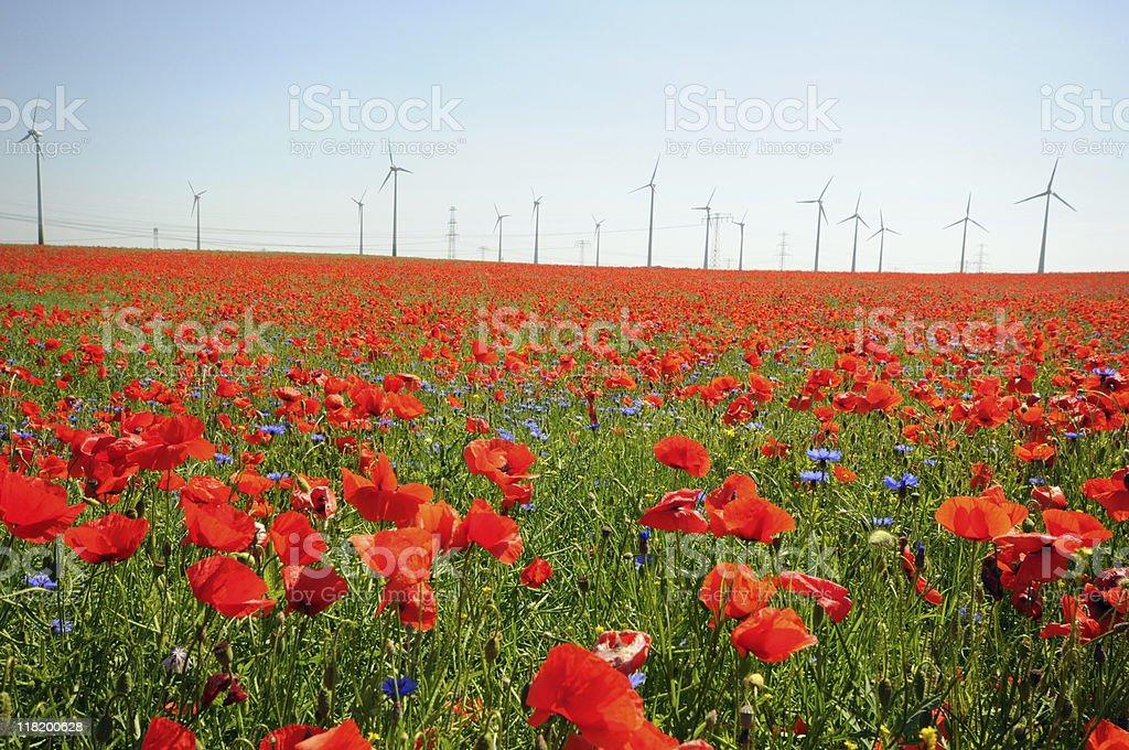 Rape fields with Wind Turbine and red Poppy stock photo