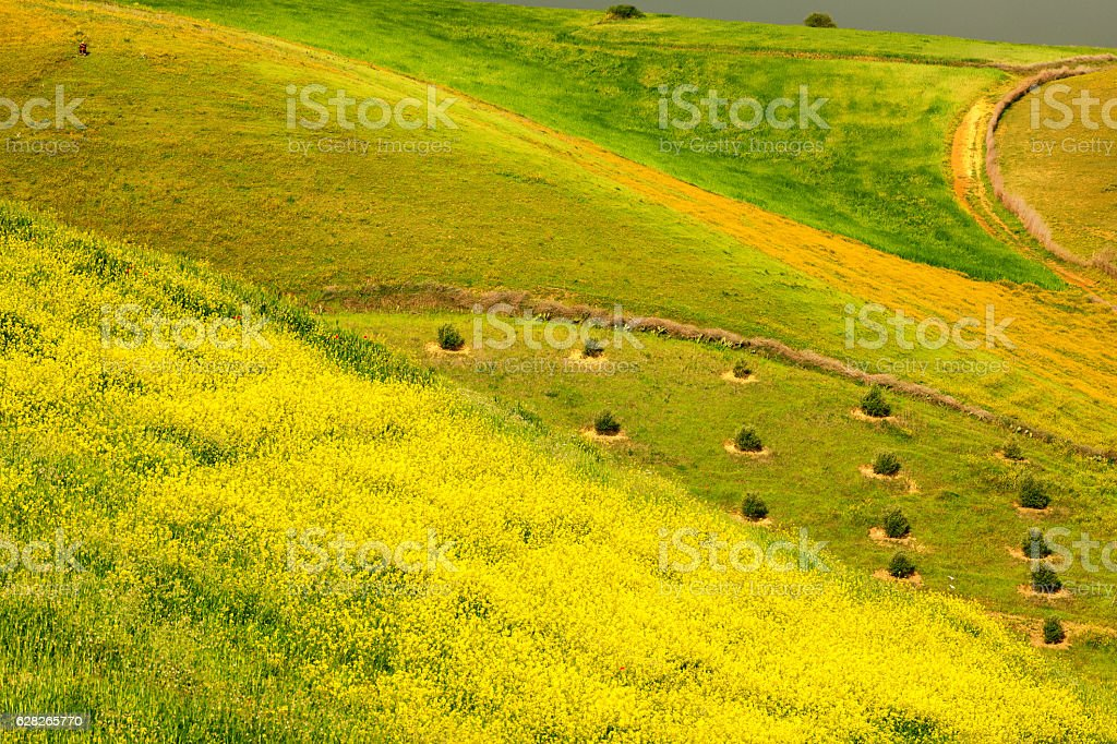 Rape, purple fence, meadows and olive groves, Morocco, Northern Africa. stock photo