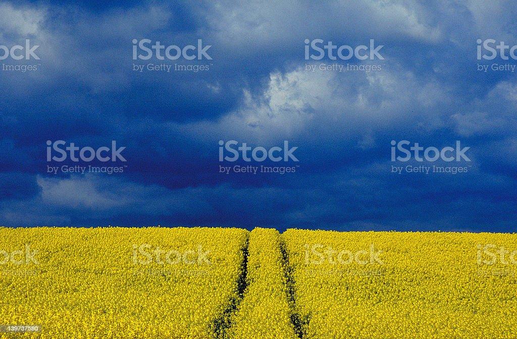 Rape und clouds royalty-free stock photo