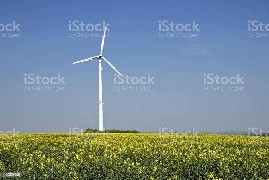 Rapeseed and windwheel stock photo