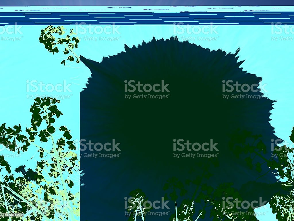 Rapeseed field at spring stock photo