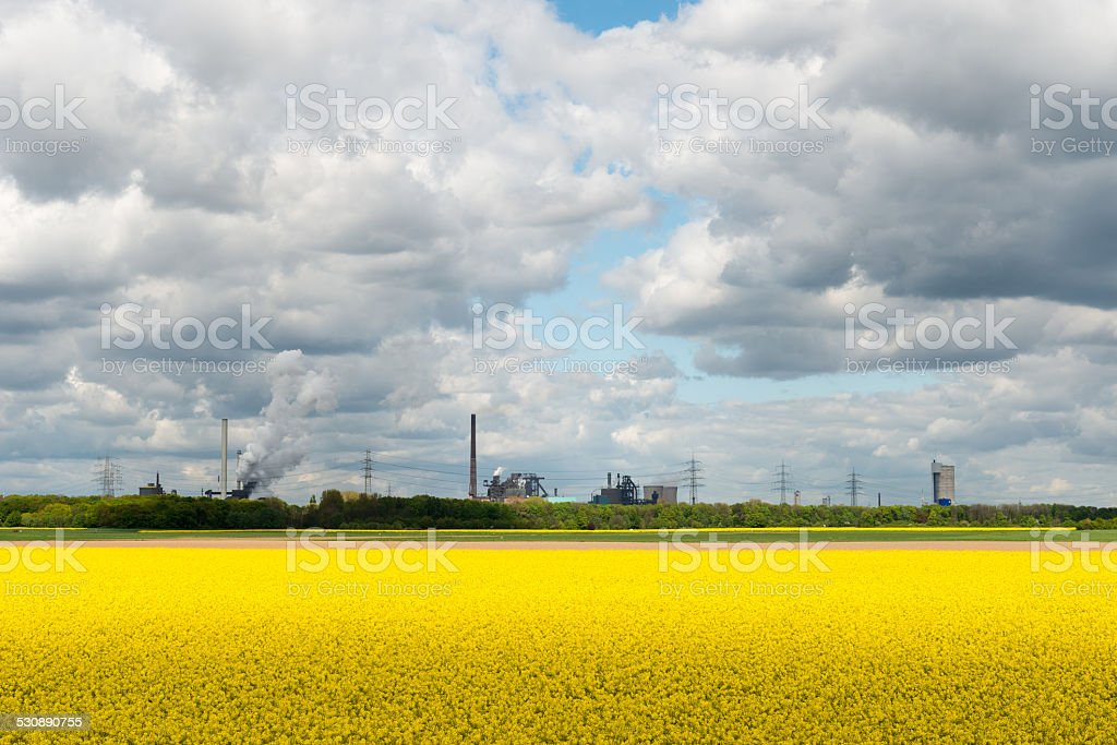 Rapsfeld vor Industriekulisse stock photo