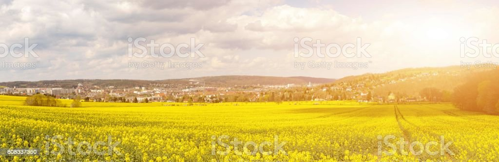 Rapeseed field on a sunny day, Rapeseed (Brassica napus), also k stock photo