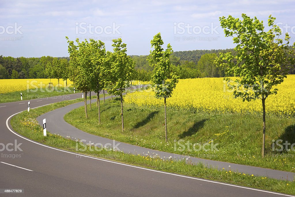 Rapeseed Field with Rural Street royalty-free stock photo