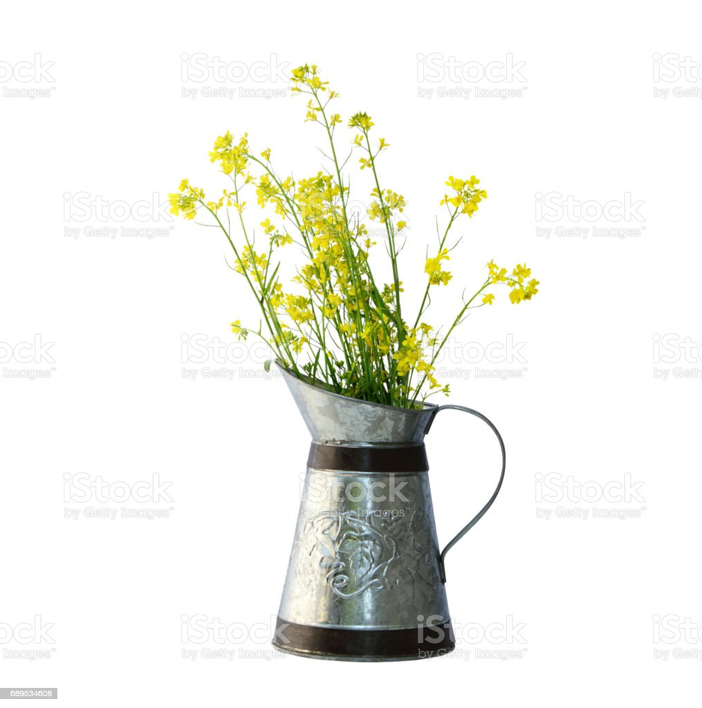 Rapeseeds Pitcher stock photo