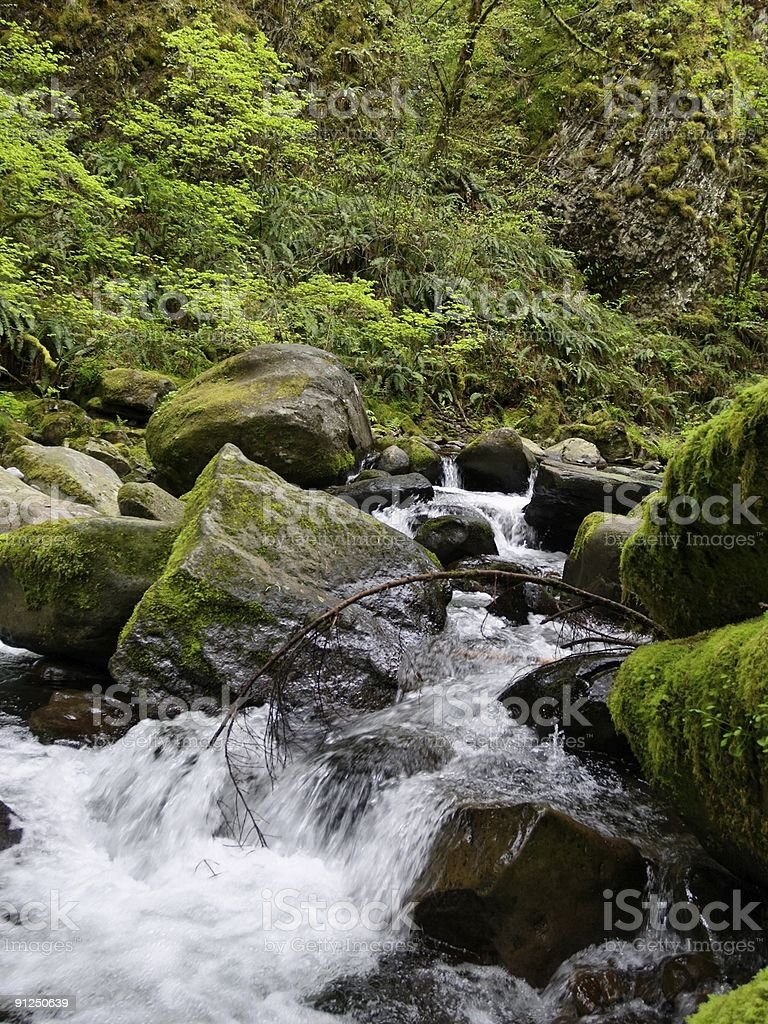 Rapids and mossy rocks along a mountain stream in spring royalty-free stock photo