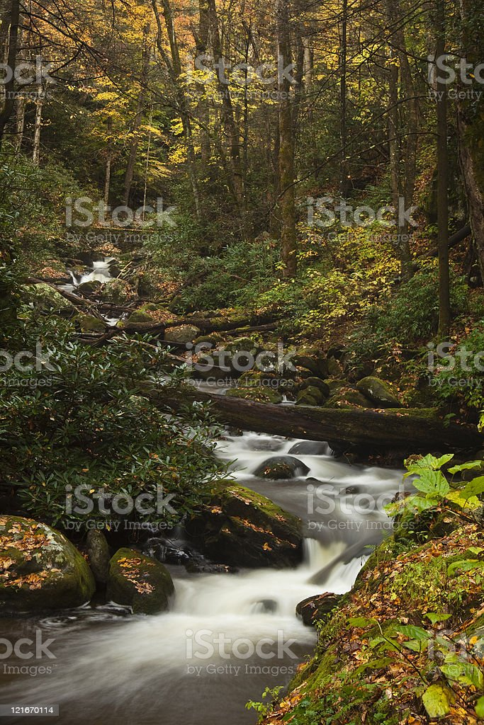Rapids in a Smoky Mountain Stream royalty-free stock photo