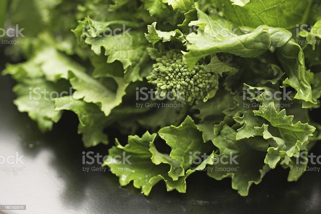 Rapini or Broccoli Rabe on a Shiny Surface stock photo