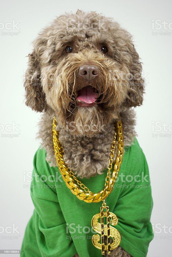 Rapper Dog stock photo