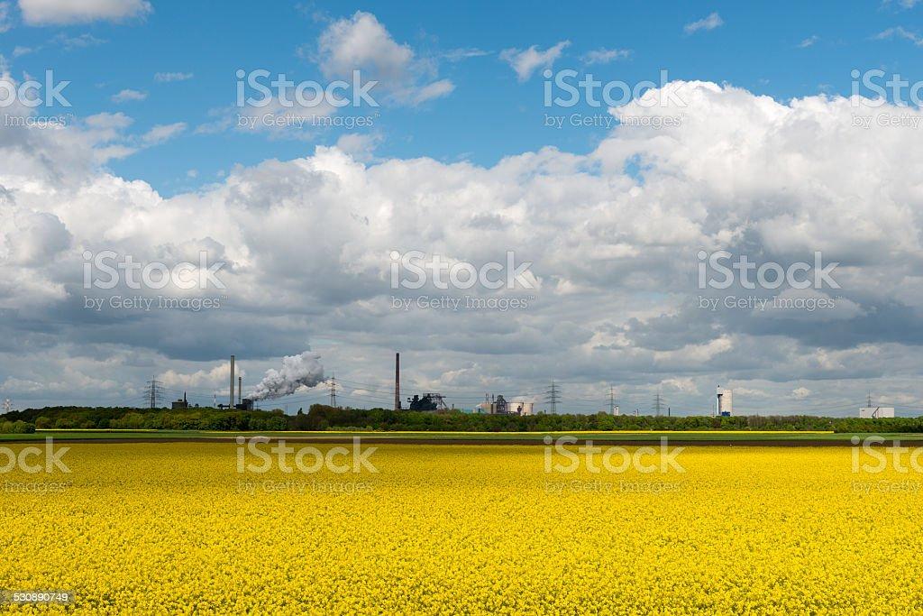 Rapsfeld vor Industriekulisse stock photo