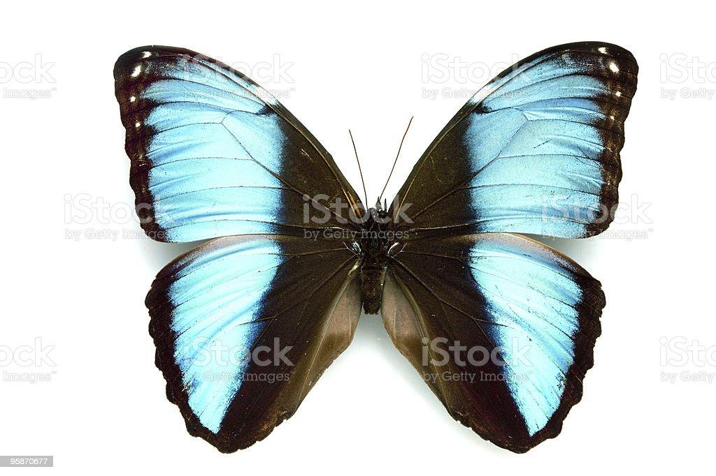 Rare Beautiful Butterfly stock photo