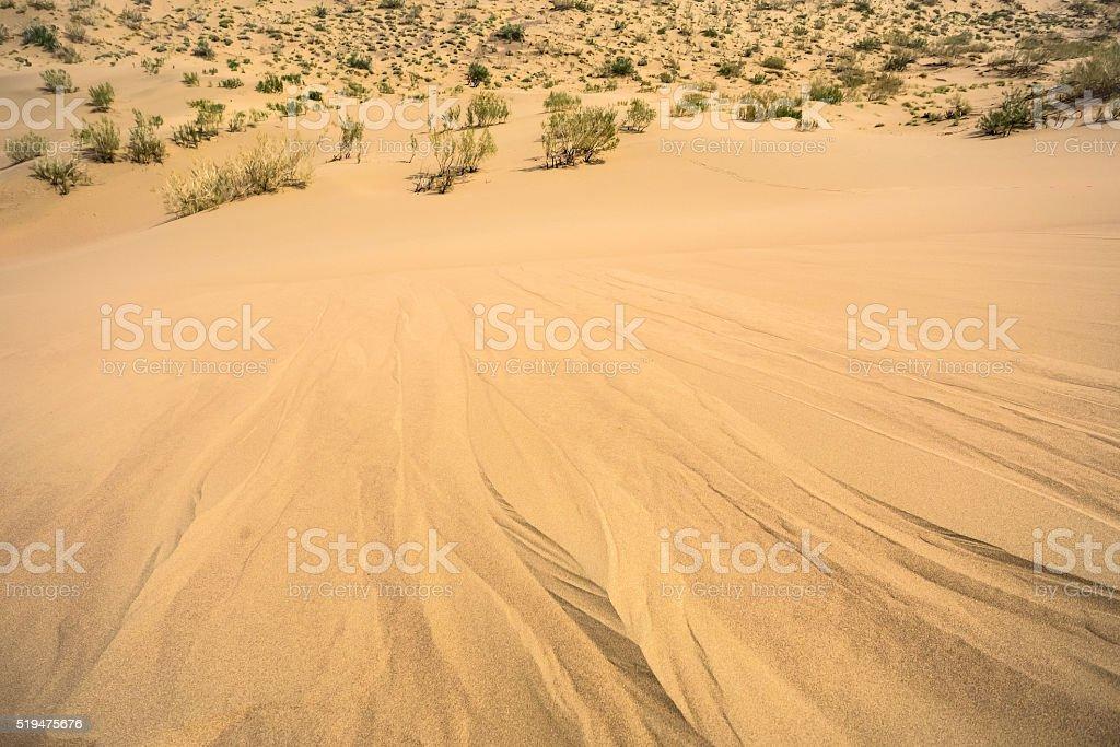 rare gnarled bushes in the desert stock photo