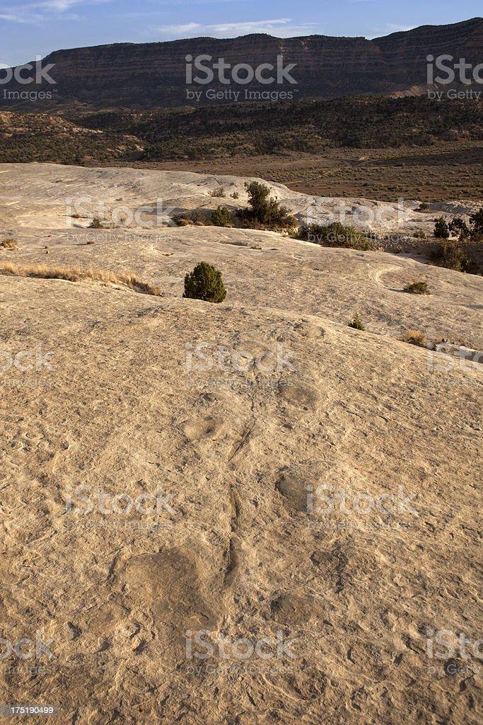 Rare tail drag and sauropod dinosaur tracks Utah's Escalante NM stock photo
