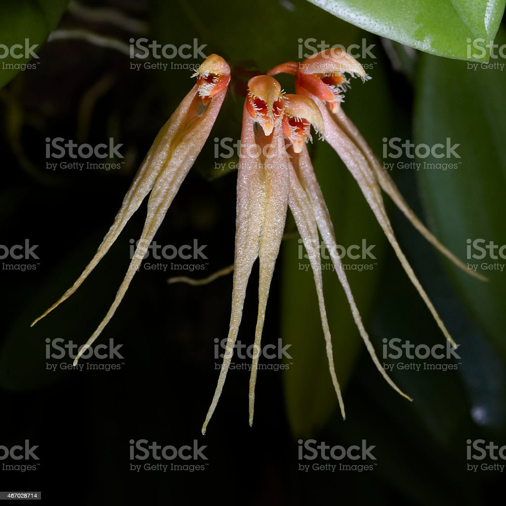 Rare tropical orchid flowers stock photo