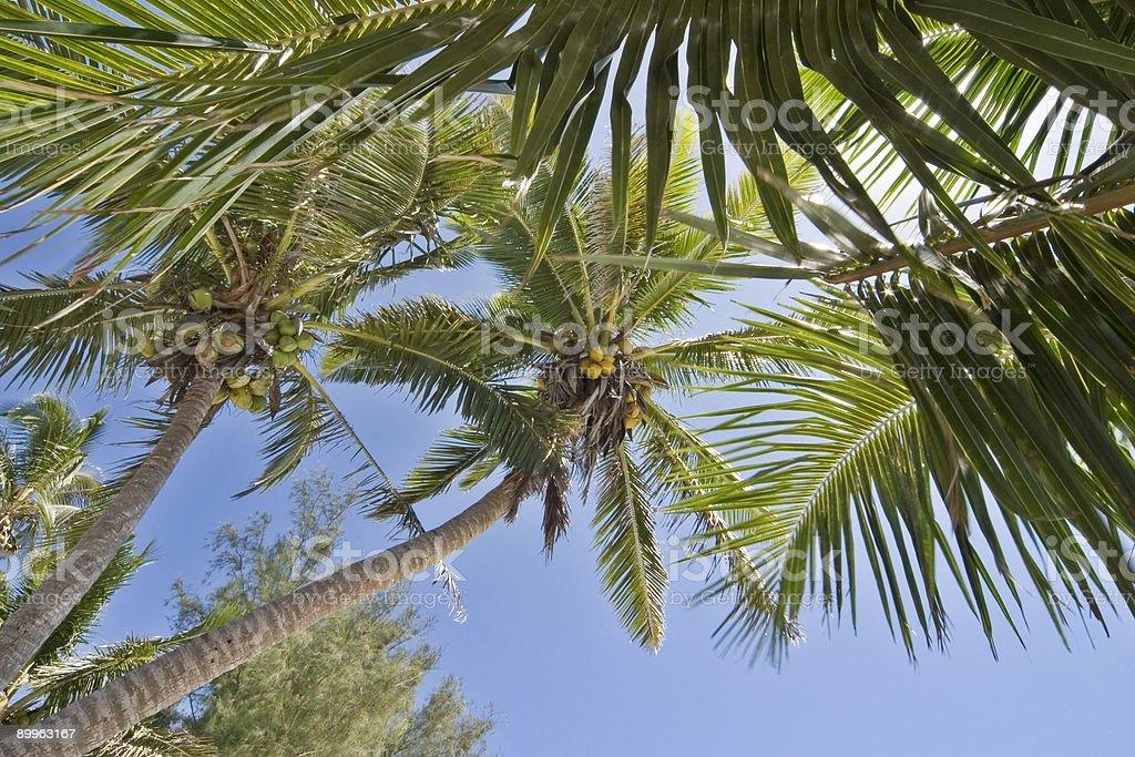 Rarotonga royalty-free stock photo