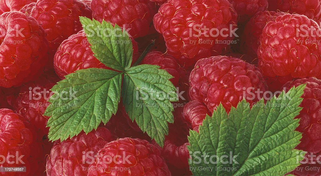 Raspberry wallpaper with Leafs royalty-free stock photo