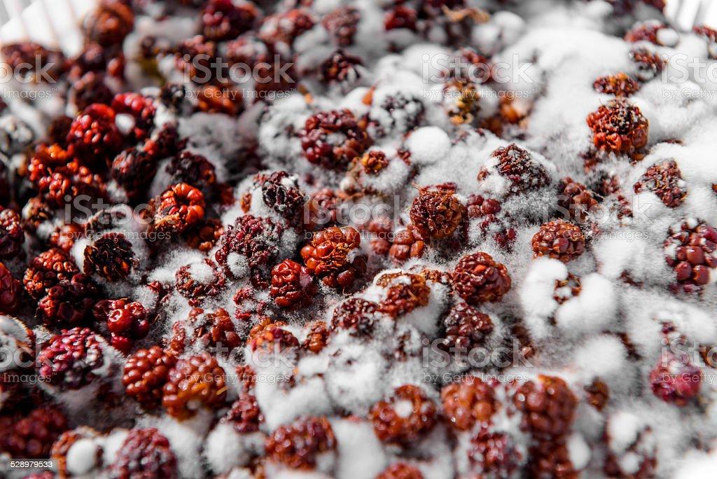 raspberry with mold stock photo