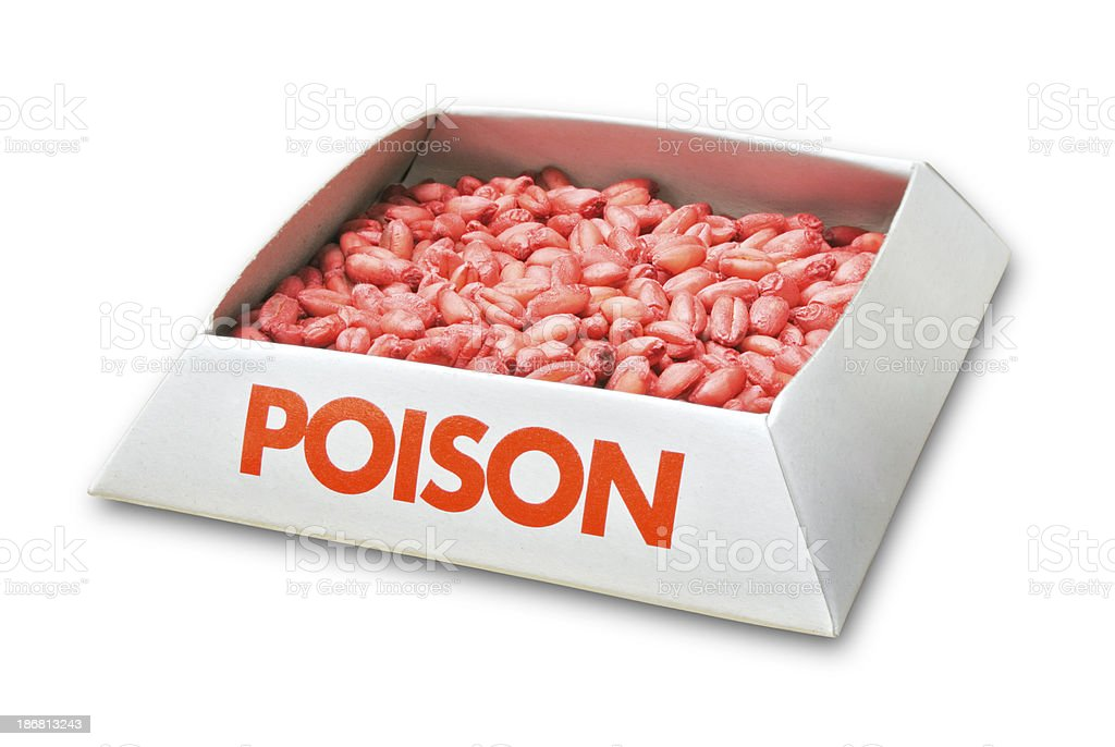 Rat Poison Rice royalty-free stock photo