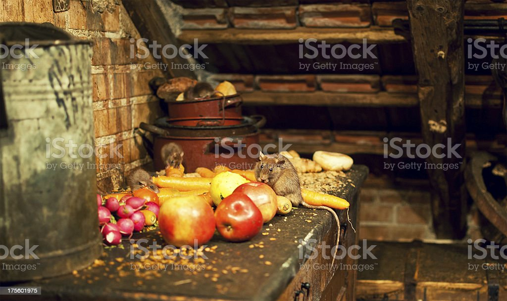 Rats eating delicious fruits stock photo