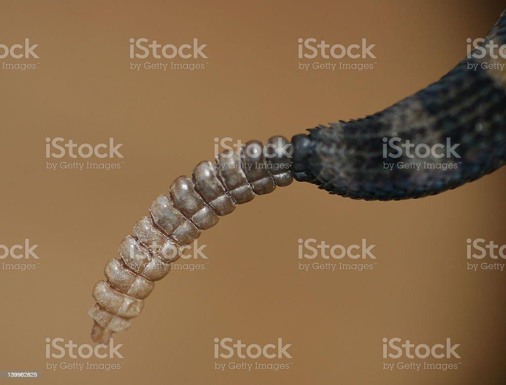 Rattle on a Rattlesnake stock photo
