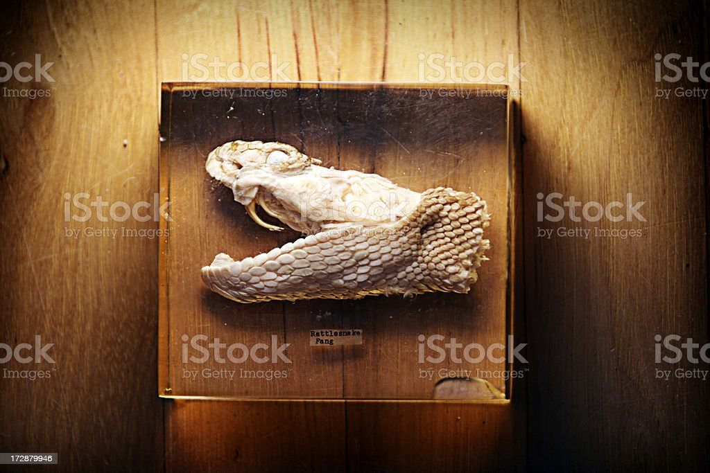 Rattlesnake Head In Plastic Cube stock photo