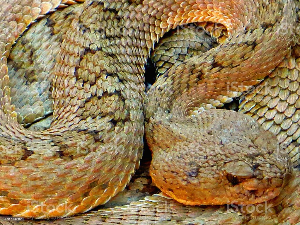 Rattlesnake in the Trail stock photo