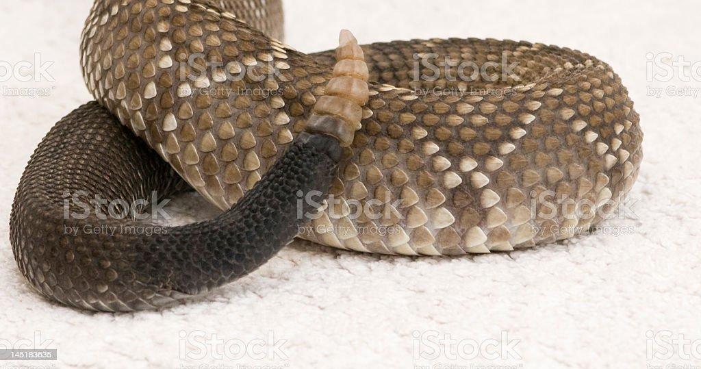 rattlesnake tail stock photo