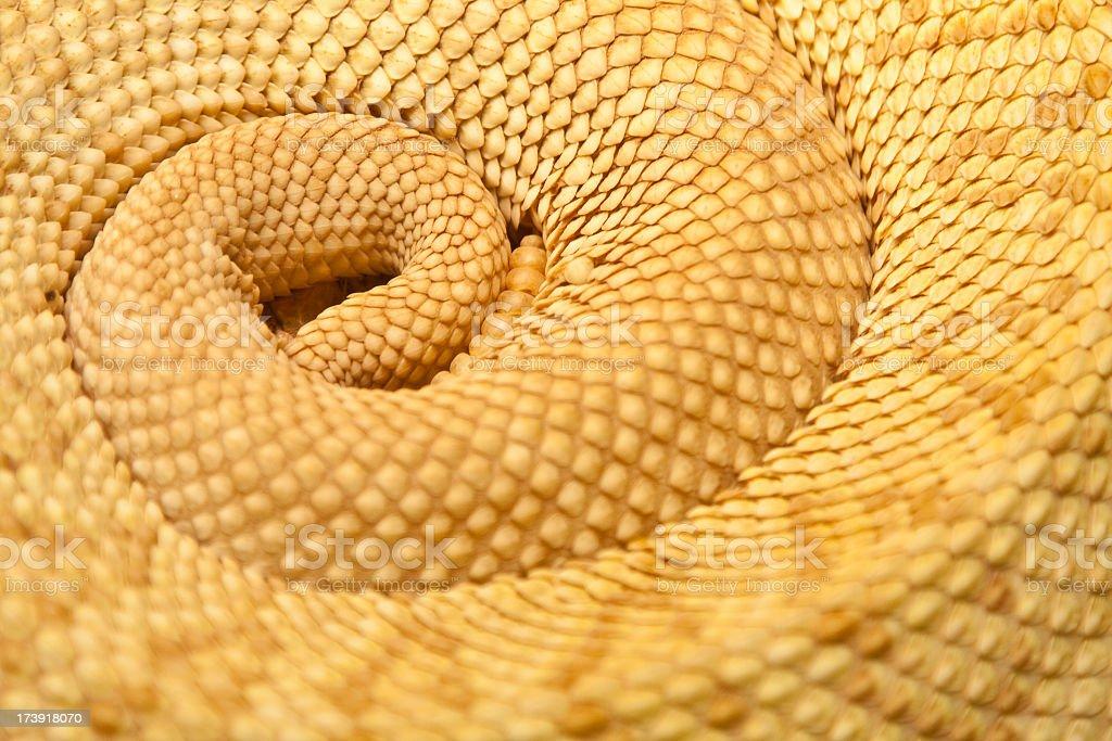 Rattlesnake's Tail stock photo