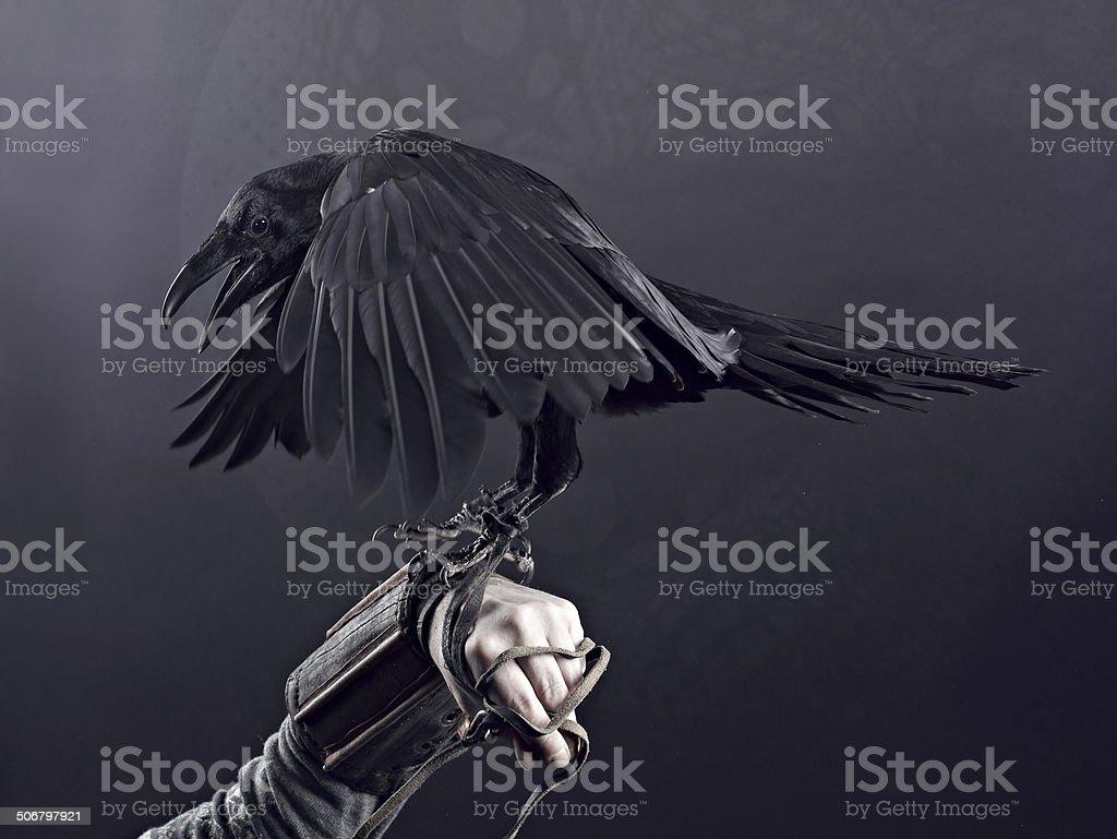 Raven hunchback stock photo