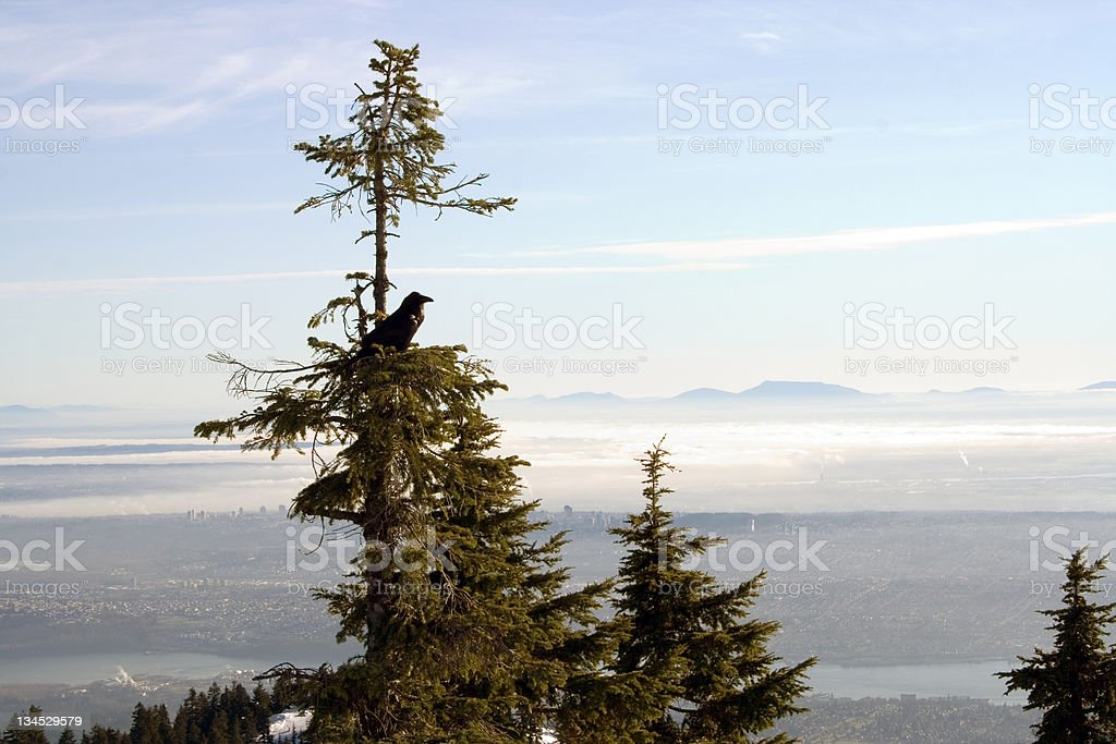 Raven in the tree royalty-free stock photo