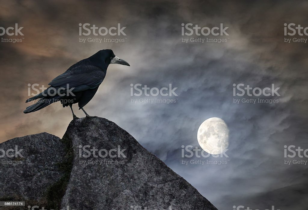 Raven on a stone stock photo